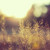 bambrose